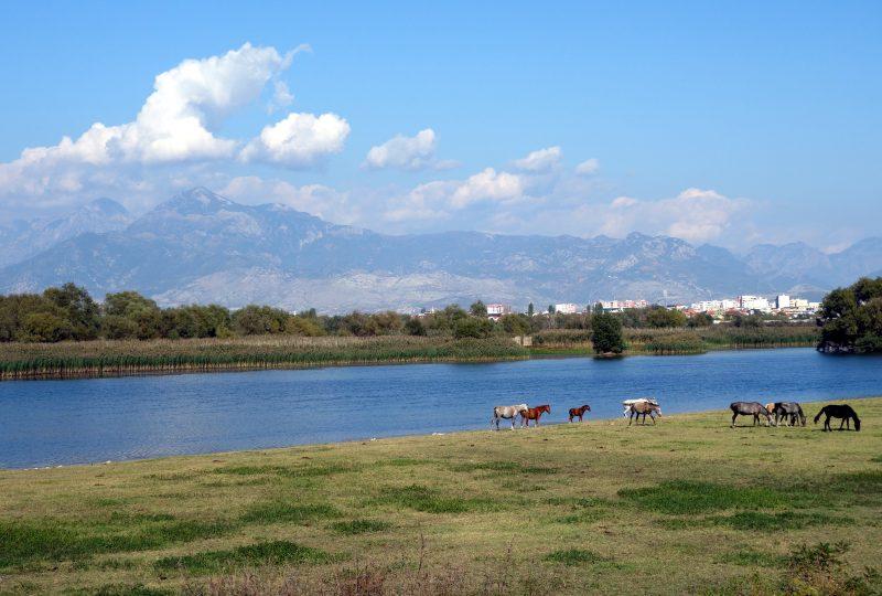 shkoder lake albanie