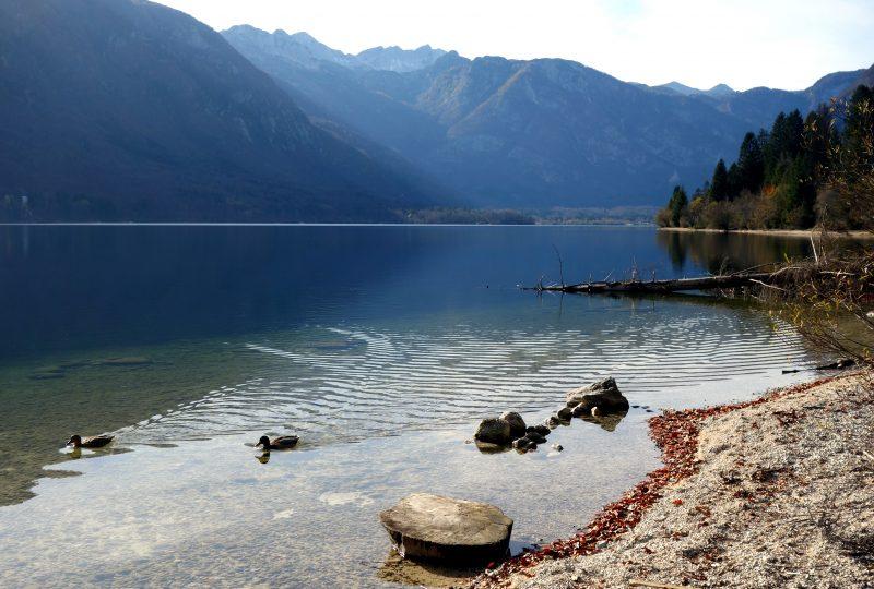 lac bohinj slovenie nature
